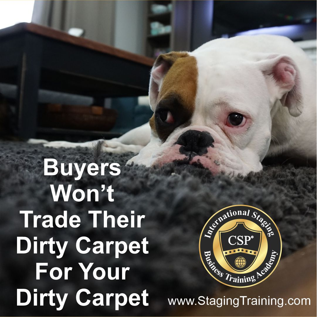 dog on dirty carpet